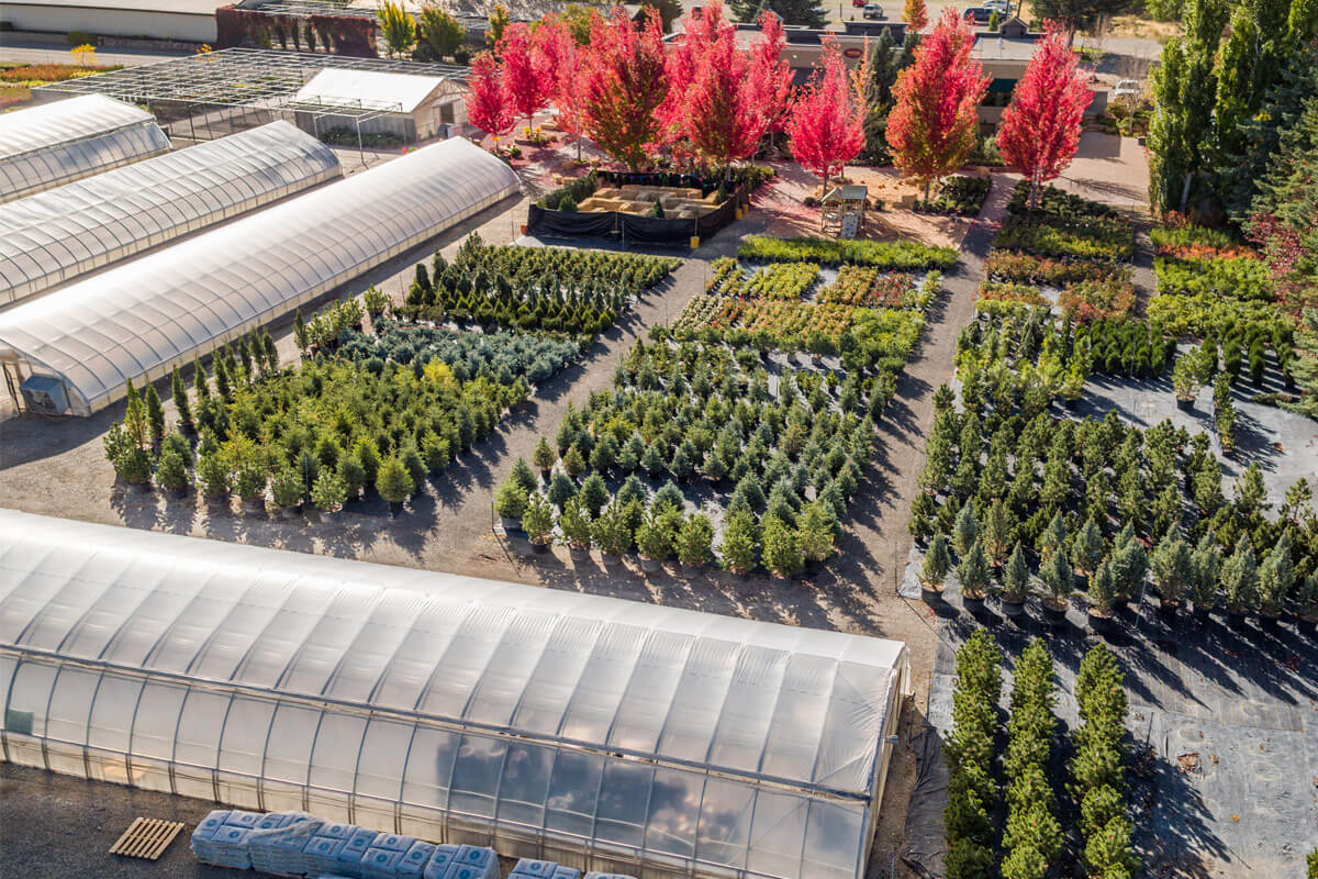 Webb Nursery Fall Aerials 2016 0027 Web