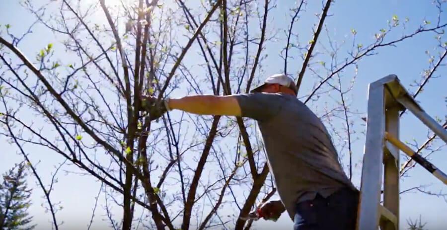 Crabapple Tree Pruning Webb Landscape Inc