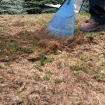 Fix Vole Damage on Your Lawn