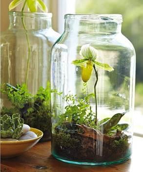 Mini Orchid Terrarium Workshop Webb Landscape Inc